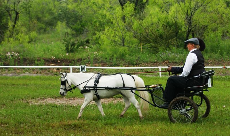 Reggie Glover receives 1st Place Dressage with miniature horse HCM Navajo's Black Tie Affair